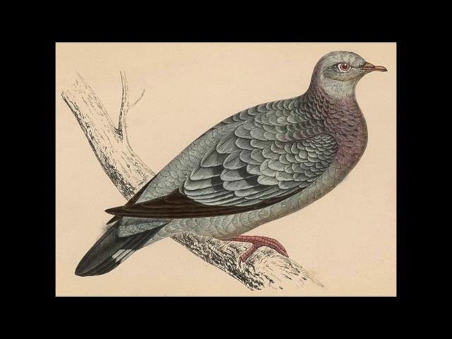Shipsea - Neviens putniņš tā nepūta