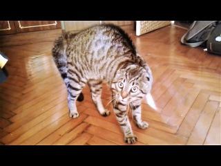 Приколы с животными 2018 Смешные видео про котов и про собак Поломки котов и поцел...