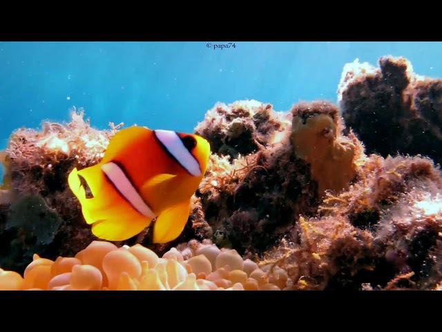 Underwater of Red Sea, Dahab, Egypt 2017