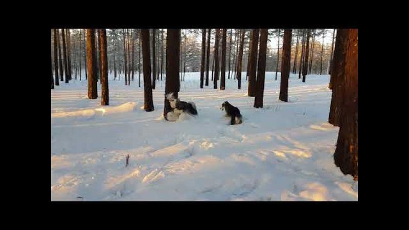 Босс и Медведь(5,5мес), первая прогулка)