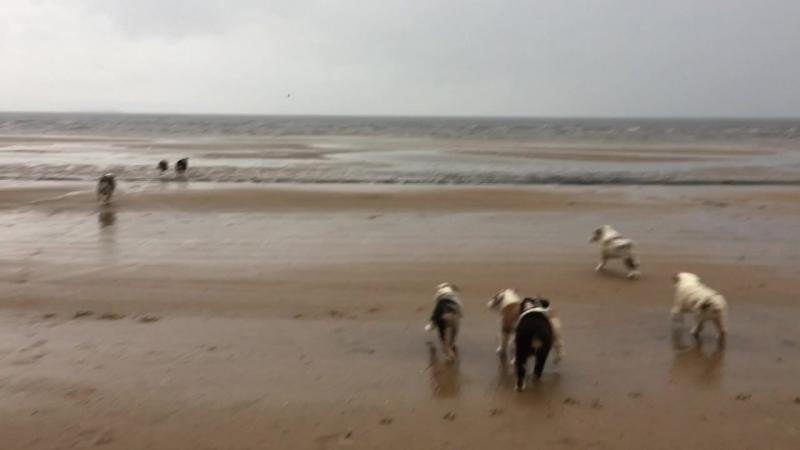 А мы сегодня выезжали на залив! Да, дождь и мокро. Но аусси не боятся плохой погоды :)