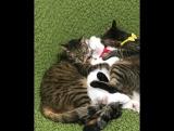 кошачье мжм :3