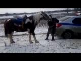 Конь не хочет помогать полиции