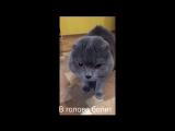 Кот говорит Голова моя болит