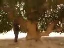 То самое дерево,где сидел пророк Мухьаммад мир ему