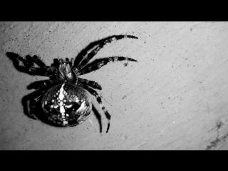 07.09.2017-паук.mp4
