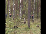В лесах Киришского района третью неделю ищут пожилого грибника