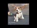 Смешные собаки_Приколы про животных 2017