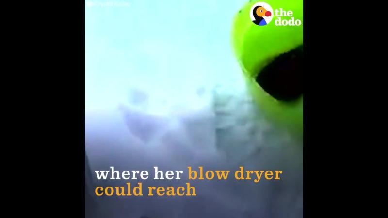 Птичка покрылась льдом, но предприимчивая девушка отогрела её феном!)