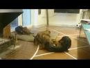 Дядя ,братья и сестра !Lucio Seneca De Grayala - Лючи. лючи lucioseneca такса таксёнок щенок собака любовь семья laropa