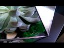 Прекрасная Эчеверия доминирует в морской композиции от студии Флорариумы в Самаре І Экоподарки