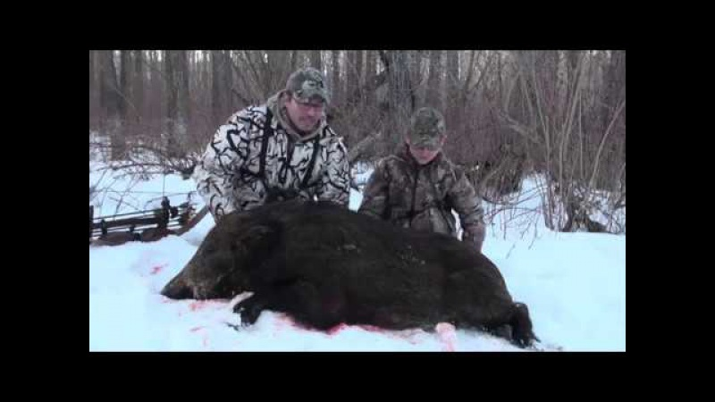 Wild Boar Bowhunt in Sask with Recurve