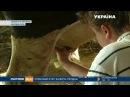 На Львівщині родина заснувала ферму з умовами, як на курорті