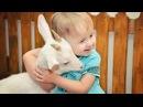 большой контактный зоопарк / детская ферма / 8(965)380-13-11