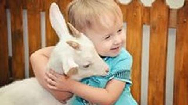 большой контактный зоопарк детская ферма 8 965 380 13 11