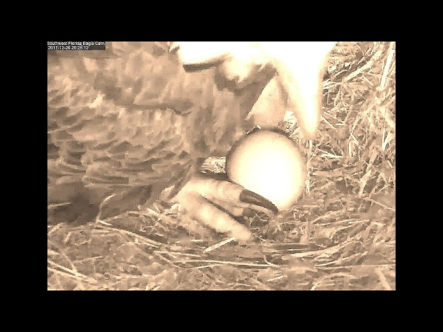 SWFL Eagles 12 26 17 854pm Congrats Harriet M15 on 1st hatch of the season