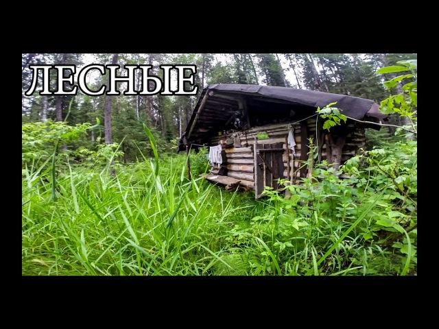 ЛЕСНАЯ ИЗБУШКА (20 ЛЕТ ЖИЗНИ) | новая печь и крыша, рыбалка на дикой реке (18)