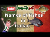 Names of fishes in italian - Learn italian language