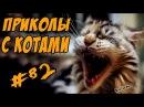 Приколы с Котами До Слёз Смешные коты и кошки 2017 Funny Cats Compilation