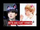 BTS as cat vines Part 1