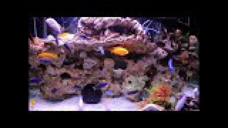 Akvaryum Balığı bakımındaki yanlışlar nedir?Sağlıklı bir hobi için pratik çözümler bu videoda.