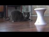 Red Dot Cat Dance - FroliCat Dart Laser Pet Toy red dot cat dance - frolicat dart laser pet toy