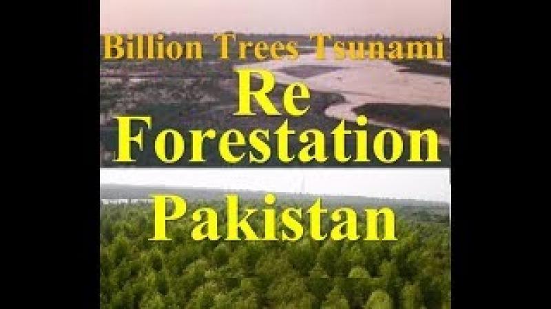 Reforestation project amazing drone footage of Pakistan's billion trees Tsunami program
