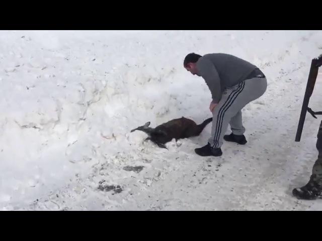 На Сахалине застрелили животное из Красной книги
