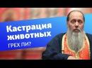 Грех ли кастрировать животных прот Владимир Головин