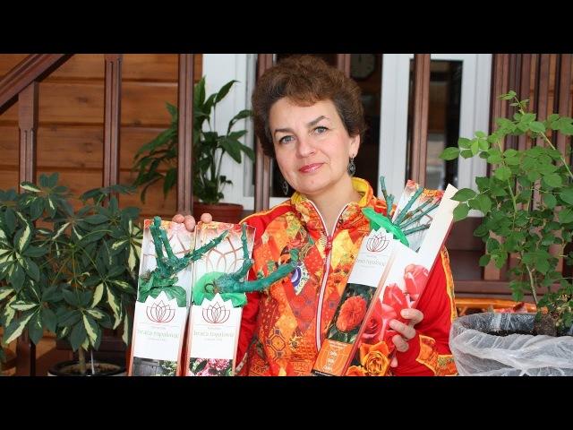 Розы из коробки Хранить или посадить