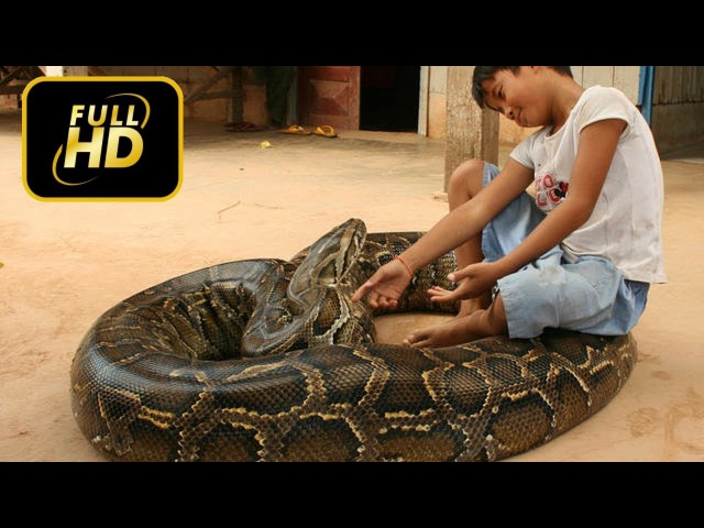 [Genius Boy] Amazing Small Kid can make friend with Giant Python