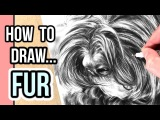 How to Draw Fur for Beginners | Drawing Realistic Fur with Graphite Step by Step