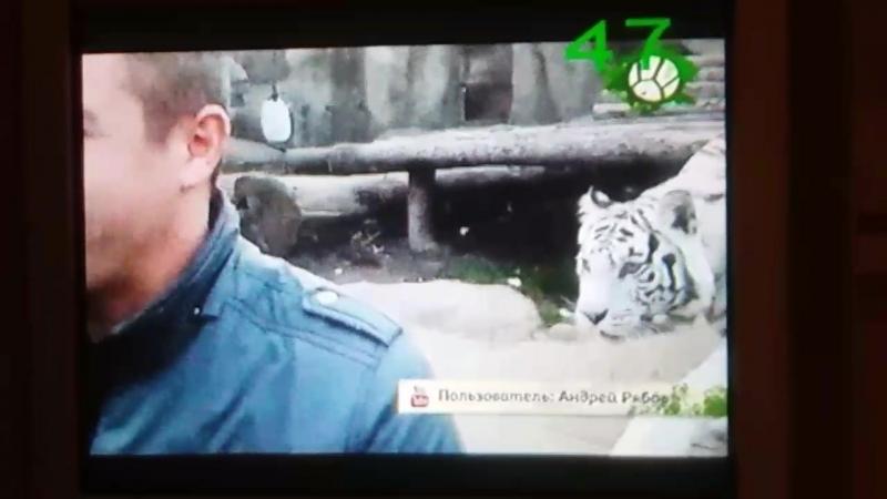 это Кали, она живёт в Московском зоопарке