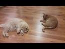 Коты и валерьянка :))