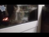 Кот говорил открой дверь