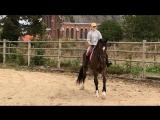 GALLIANO  молодой конь 2011 года