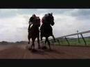 Скаковая лошадь Резвая последние минуты жизни_low.mp4