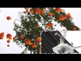 021 Белые березки (слова- Семенов Алексей, вокал- Гагина Оксана)