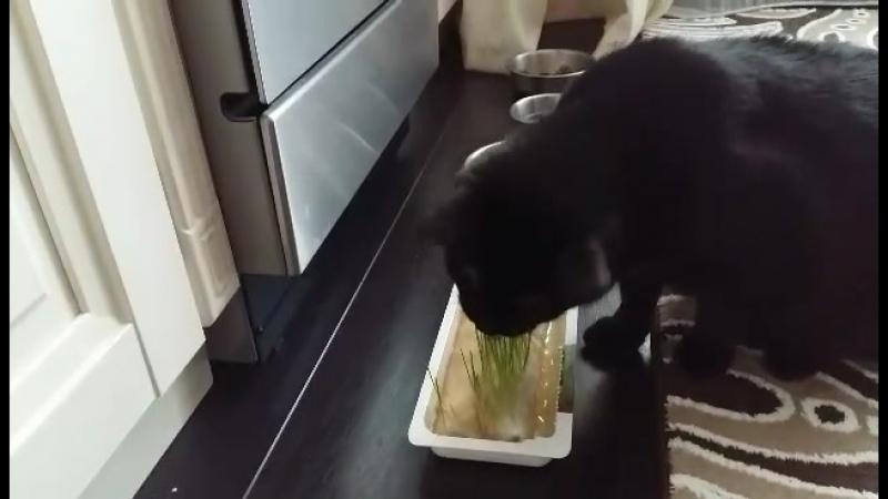 Служанка, ты бы ещё реже травку посадила...