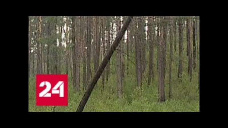 Профессия - ЛесоВОР (Россия 24) | ВНИМАНИЕ, СМОТРЕТЬ ВСЕМ, А ТАК ЖЕ ПРОСЬБА РАСПРОСТРАНЯТЬ⚠