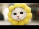 Самые милые котики