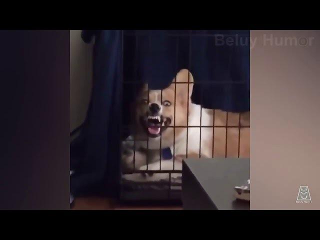 Та самая бешеная собака ржёт в клетке