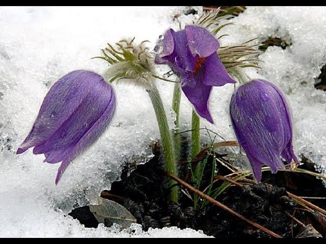 Клумбы цветущие ранней весной и осенью Названия цветов Фото