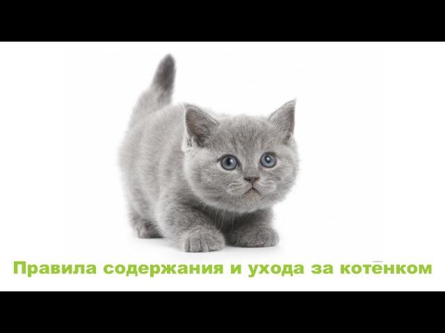 Завели котёнка. Правила содержания и ухода. Ветеринарная клиника Био-Вет.