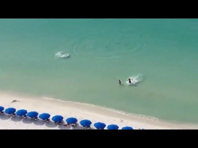 Внезапно появилась акула на пляже
