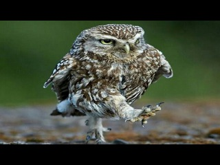 Funny Owls And Cute Owls | Best Owl Videos Compilation