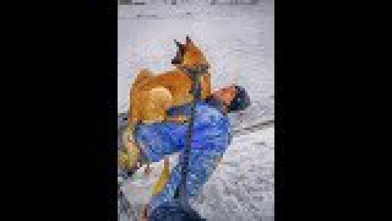 Дрессировка собак ЗКС