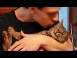 Смешная реакция котов на поцелуи