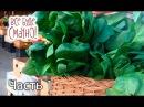 10 блюд из шпината. Часть 1 — Все буде смачно. Сезон 5. Выпуск 23 от 18.11.17