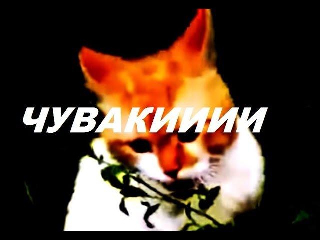 Обдолбаный кот говорит: